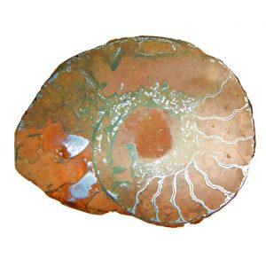 Pietra di ammonite Fossile