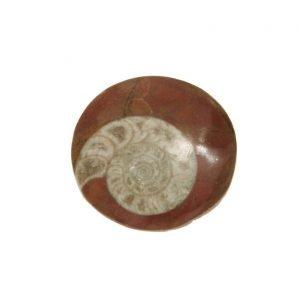 Ammonite fossile